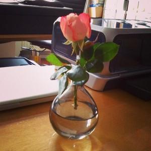Rose einzeln