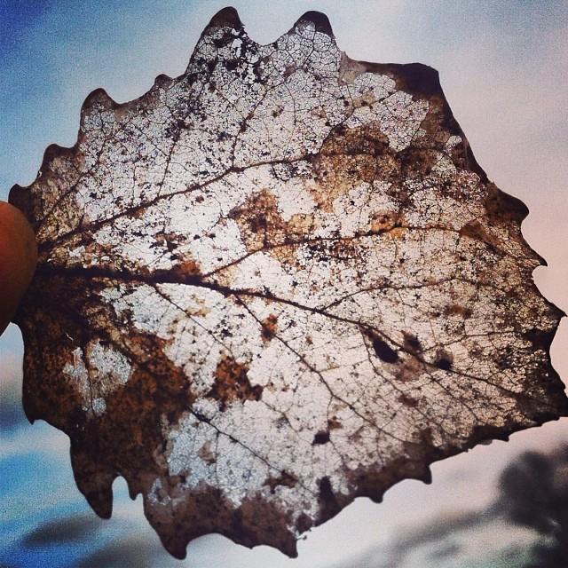 vom Herbst