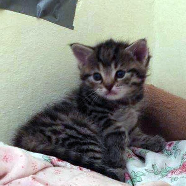Katzenkind 1