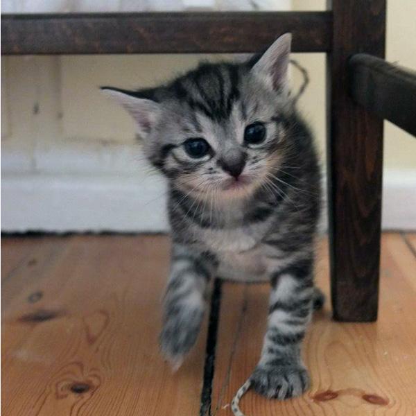 Katzenkind 2