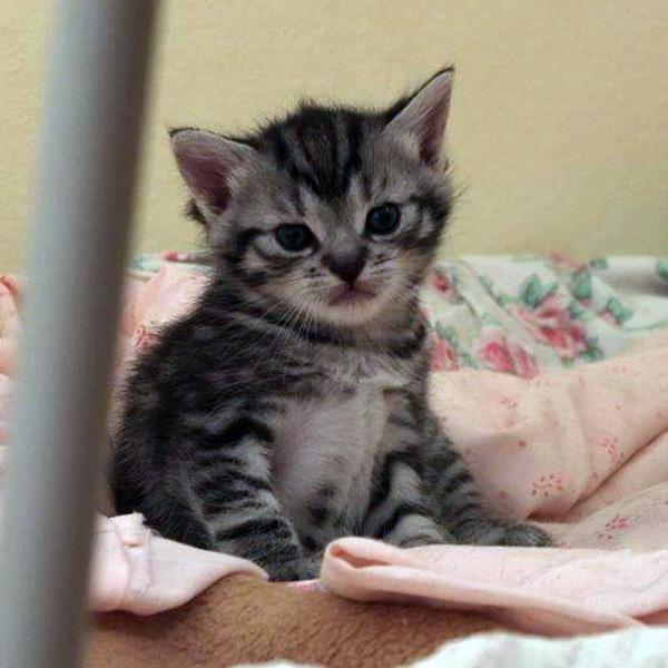 Katzenkind 3
